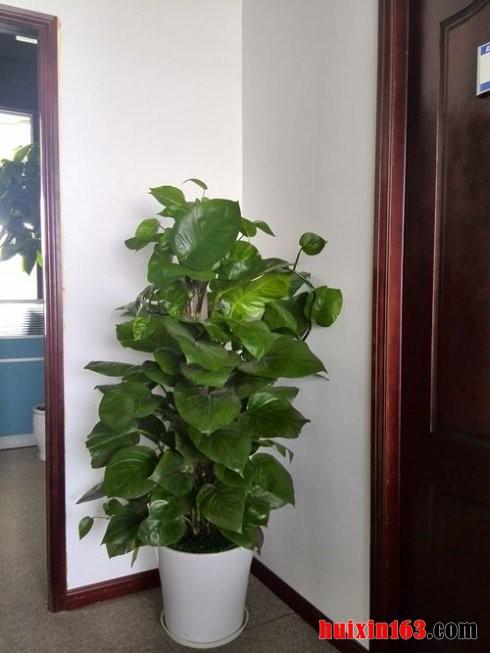 2 室内装修装饰盆栽